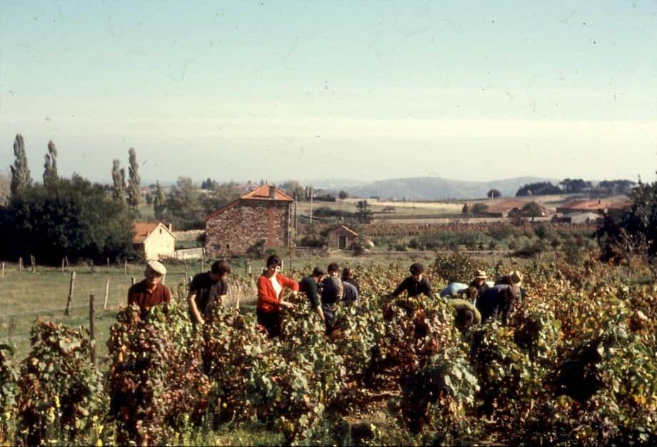 Photo-vendanges-au-ménard_